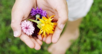 child's hands holding wild flowers